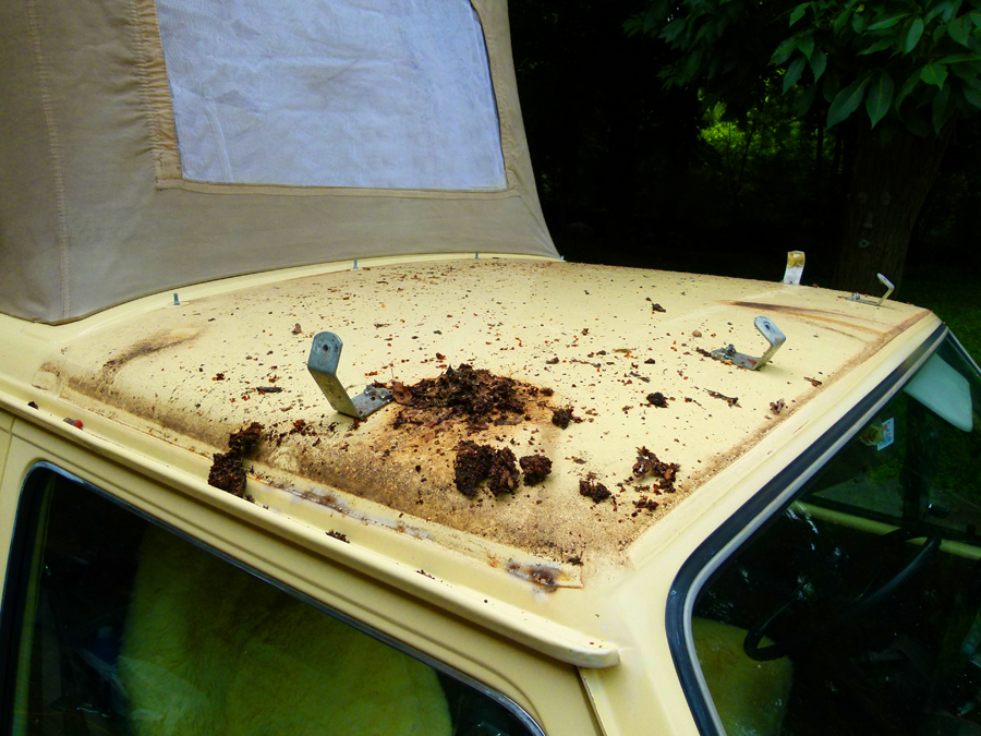 If Your Westy Spends Much Of Its Time Loafing Under Campground Trees, You  Will Likely Discover A Surprising Amount Of Rotted Leaves, Pine Needles, ...